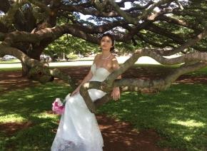 ハワイ「この木なん木」